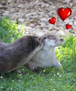 """""""Stachelschweinereien und mehr"""" zum Valentinstag"""