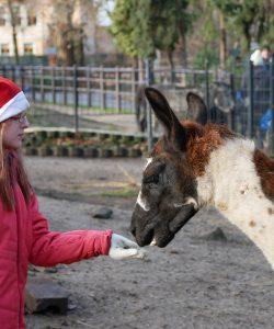 Bescherung der Zootiere – ENTFÄLLT